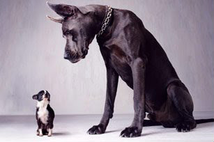 The Powr of Intimidation - Big Dog Little Dog